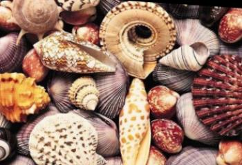 Seashells in the interior